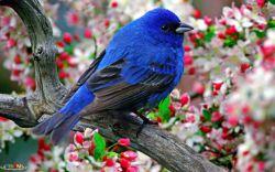 پرنده استقلالی
