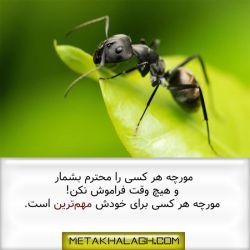 مراقب مورچه دیگران باشیم، این مقاله زیبا را در سایت متاخلاق مطالعه کنید.