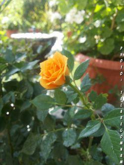 طلبه گمنام نوشت:دلم اتفاقی میخواهد ترجیحا جهت افتادن اما اینبار حواسم هست  اگر افتاد،نشکند....