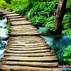 زندگی مثله یک پل قدیمیه!به این فکر نکن که اگر تنها ازش بگذری ,دیرتر خراب میشه به این فکر کن که اگر افتادی یکی باشه دستت رو بگیره ......
