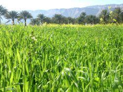 #طبیعت #فاریاب #سایت #پاریو #کشاورزی #منظره #زیبا