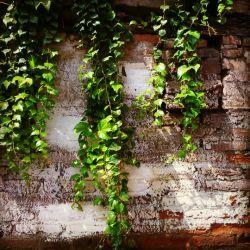 پیچک خاطراتت روی دیوار عمرم،  همچنان میرویند... میگذرد....  قاب خیال میشود