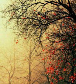 هنوز مانده به تقویم برگ ریز ولی  تو نیستی و دلم  چار فصل  پاییز است ..