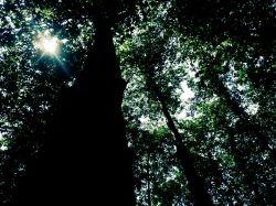 جنگل نمارستاق  جاده هراز