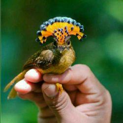 پرنده کوچولو