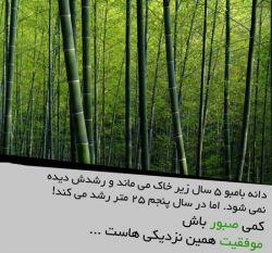 صبور باشید *ـــــــ*