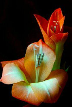 از امام علے (علیہ السّلام) پرسیدند  کدام یڪ برتر است: عدالت، یا جود و بخشندگے؟                             حضرت فرمود:عدالت، هر چیزے را بہ جاے خود نـهد؛ و بخشش، آن را از جایگاه خود خارج سازد؛ عدالت، نگاهبان عمومے است؛ و جود و بخشش، مشڪل گشاے خصوصے؛ پس عدالت، ارزشمندتر و برتر است.  نـهج البلاغـہ/ حڪمت ۴۲۹