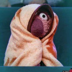 وقتی که جناب خان سردش میشه.