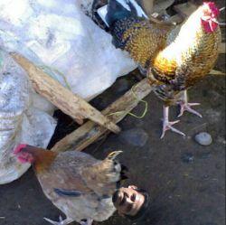 عکس کمتر دیده شده ار امیررررررخان در حال متولد شدن ههههههههههههههه   @salam1349