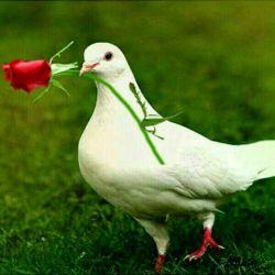 تقدیم با عشق به همتون
