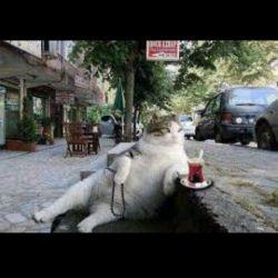 این گربه هم از مردم یاد گرفت بدآموزی داره دیگه