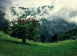 با سفر به جنگل ابر،راه رفتن بر روی ابره ها را تجربه کنید
