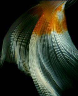 زندگی ،  باور دریاست ،  در اندیشه ی ماهی ، در تنگ....