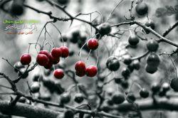 درختان شینال #فرآزوم