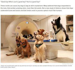 اسکن مغزی نشان میدهد که سگها هم حرف ما را میفهمند و هم لحن را تشخیص میدهند. http://www.today.com/health/dogs-understand-what-we-say-how-we-say-it-brain-t102340