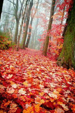 پاییز درراه است  ابرهاکم کم می آیند  کوچه هایک بند میخندند  خیابانها پر ازعاشقانه وپاییزرابیشترازآنچه که هست  دوست داشتنی میکند یک موسیقی آرام بخش که صدای خش خش برگ های زیر قدمت باشد.