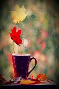 پاییز من، عزیز غم انگیز برگ ریز! یک روز می رسم و تو را می بهارمت....
