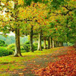 مهرت به دل نشست دلم پاییز شد..