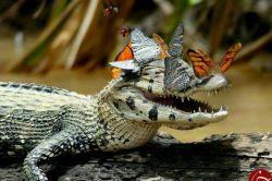 حتی تمساح هم میتواند لبخند بزند و مهربان باشد