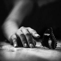 پروانه#