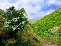 کوهستان منطقه  اورامانات در فصل بهار  - استان کرمانشاه