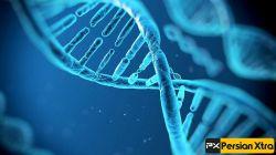 115 سال بیشترین حد استاندارد طول عمر انسان هاست  ادامه در وب سایت پرشن ایکسترا http://persianxtra.ir/?p=1132