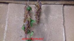 نگهداری سنتی انگور
