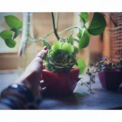 . . یادمه خیلی سال پیش  اصلا گل و گیاه دوست نداشتم ،  تنها گلی که دوست داشتم رز سفید بود  اما توی گذر زمان دیدم که گلای دیگرو هم دوست دارم ، مثل ارکیده ، آفتابگردون .. و.. و.. و.. بازم توی گذر زمان و در حال حاضر عاشق همه ی گل و گیاها شدم ،  دیدم که زندگی واقعا با گل و گیاه یه جوره دیگه اس  با سبزینگی خیلی خیلی قشنگتره  نمی تونم حتی تصور کنم که یه روز گل و گیاه و درخت دورو برمون نباشه  بیایم حواسمون به این قشنگیا باشه  فکر کنیم اگه یه روز نباشه چی میشه واقعا!! . .