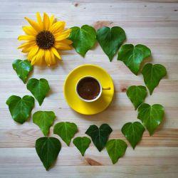 چون چهرهی صبح،   شادمان باش  تا چند ملول می نشینی...   (پروین_اعتصامی) سلام و روزتون زیبا و  دلنشین