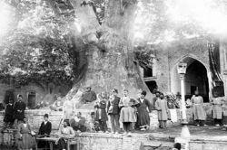 درخت چنار امامزاده صالح :')