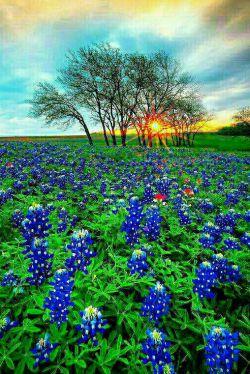 سلام آفتاب دوست داشتنی ..  دوباره آمدی ؟ قدمت به خیر ..  وقتی برای بیدار کردن  دوستانم میروی یک سبد عشق ،  روی چشم هایشان بپاش .. صبحتان بخیر دوستان عزیز