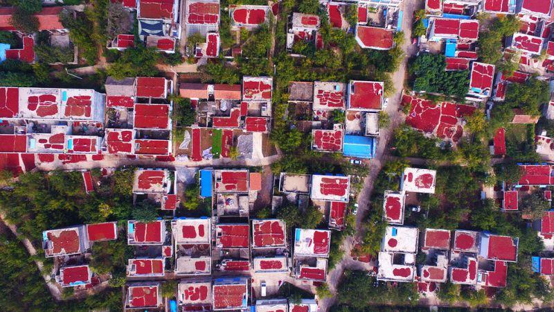 خشک کردن میوه عناب روی پشت بام خانه های روستایی در چین