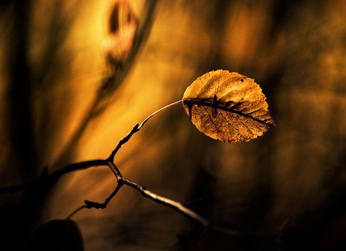 برگ است ان هم از نوع پاییزی ..برگ زندگی در خیابان های خیس نم دار پاییزی نم بارانی ک میبارد تاا دل را باخود ببرد ...برگ برگ زندگیست :) متن :چشم انتظار