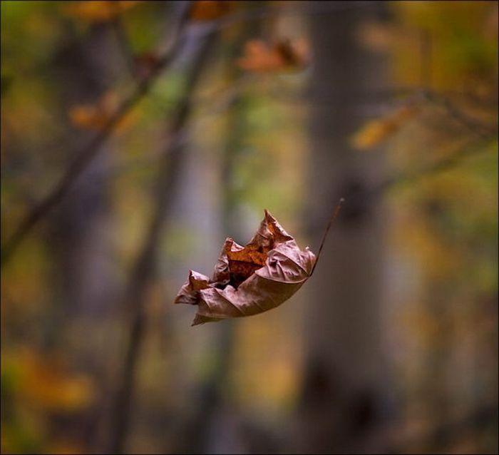 تنهایی مثل باران پاییزی وسوسه قدم زدن است در خیابان … که می روی و باز می گردی و تازه می فهمی ، خیس شده ای تا مغز استخوان هایت !