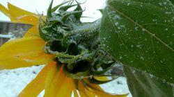 چهره زمستانی ایردموسی در چهارم آبان 95 جلوه های زیبا از اولین بارش برف پاییزی  سایت رسمی ایردموسی irdemusa.ir