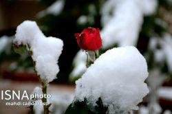 فصل زمستان زودتر از وعده ای که داده بود  آمد #مهدی تندرست