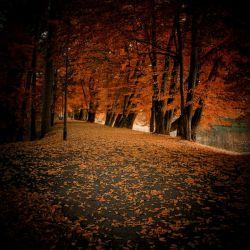 درد دل مرا  فقط برگهای خشکیده می  فهمند رنگ دل مرا فقط پاییز می داند وحجم اندوهش را فقط برگ ریزان درختان پاییزی می دانند