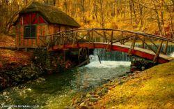 تنهایی نام دیگر پاییز است هرچه عمیق تر برگ ریزان خاطره هات بیشتر  امیدوارم خاطرات رنگی خوبی داشته باشید