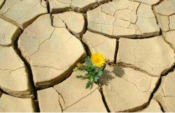 اگر حس روئیدن در تو باشد حتی در كویر هم باشی  رشد خواهی كرد.
