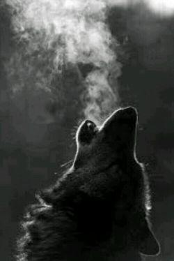 گرگ ها هرگز گریه نمی کنند اما گاهی چنان عرصه زندگی بر آنان تنگ می شود که بر فراز بلند ترین کوه میروند و دردناک ترین زوزه ها را می کشند
