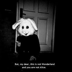 اما عزیز منـ ... اینـ سرزمینـ عجایبـ نیستـ! و شما آلیسـ نیستیـ ! :)