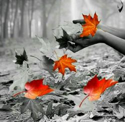 . برگریزان دلم را نوبهاری؛ آرزوست...