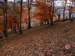 گیلان-شهرستان فومن-تیمور کوه-پاییز 91-عکس : بهرام حاجی زاده
