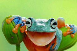 هارمونی رنگها در طبیعت