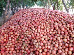 انبار سنتی انار