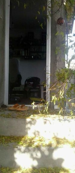 زنگ پاییز زد و  رنگ رخساره پرید