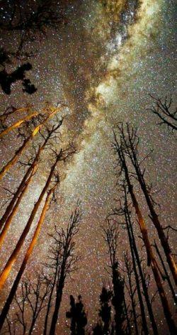 کهکشان راه شیری بر فراز شهر تگزاس