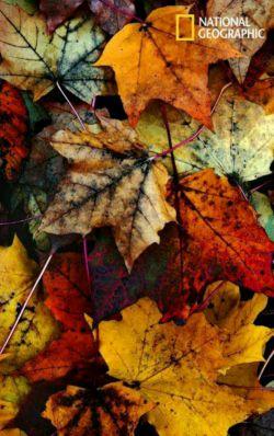 رنگهای دلپذیر پاییزی