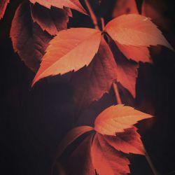روی شانه پاییز زدم حالش را بپرسم ! ناگاه ریخت !  گاهی پرسیدن حالی چه دردهایی را زنده می کند ...