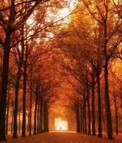 آرام شـــده ام . . .  مثــلِ درختــی در پاییـــز . . .  وقتــی تمـام برگـــ هــایش را . . .  بــاد بــرده بـاشــد . . .